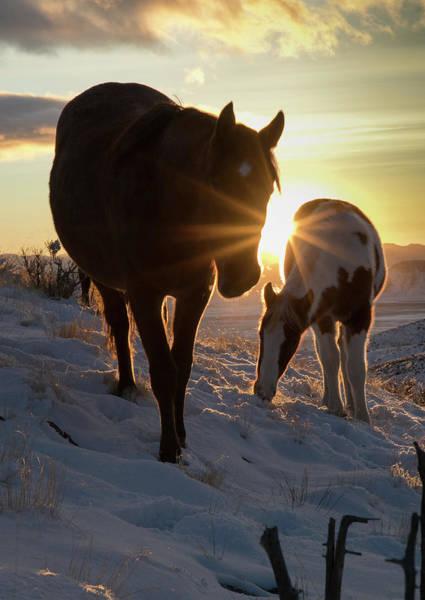 Photograph - Sunset Pair by Kent Keller