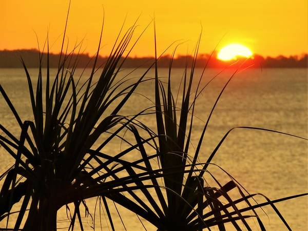 Photograph - Sunset Pandanus by Joan Stratton
