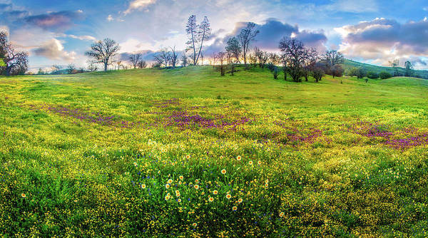 Photograph - Sunset Panorama Over The Shell Creek Superbloom 2019 by Lynn Bauer