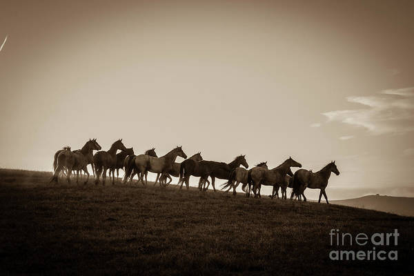 Wall Art - Photograph - Sunset Run, Sepia by Hoof and Soul Photography