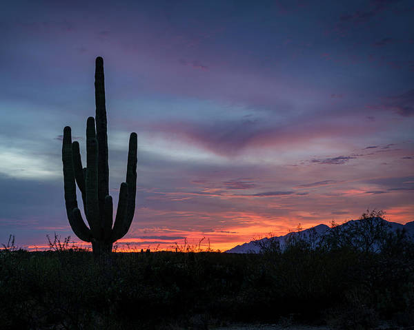 Photograph - Sunset Saguaro by Laura Hedien