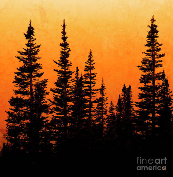 Wall Art - Photograph - Sunset Silhouette by John Stephens
