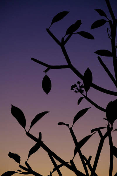Photograph - Sunset Silhouette by Nicole Young
