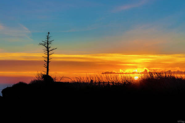 Photograph - Sunset Silhouetted Lone Snag by Dee Browning