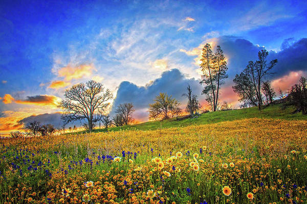 Photograph - Sunset Skies And Wildflowers At Shell Creek - Superbloom 2019 by Lynn Bauer
