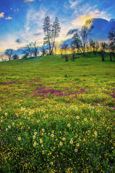 Photograph - Sunset Skies And Wildflowers At Shell Creek Vertical - Superbloom 2019 by Lynn Bauer