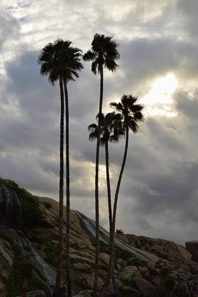 Photograph - Sunset Springs And Palms by Glenn McCarthy Art and Photography