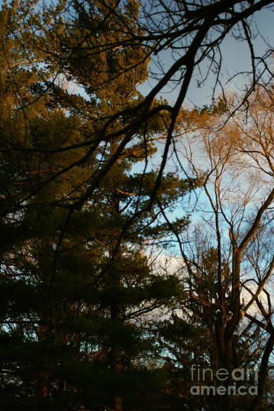 Photograph - Sunset Through The Branches by Frank J Casella