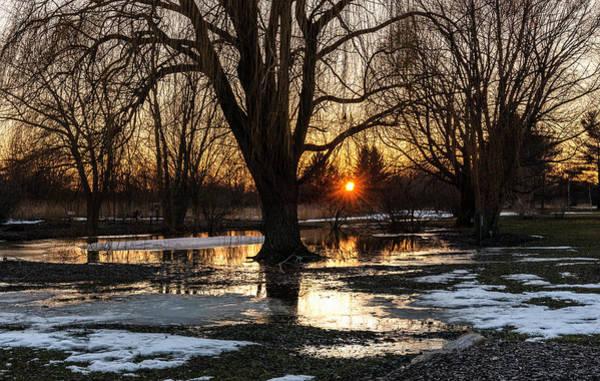 Photograph - Sunset Through The Trees by Willard Sharp