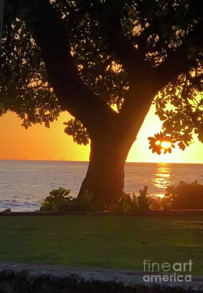 Photograph - Sunset Tree by Karen Nicholson