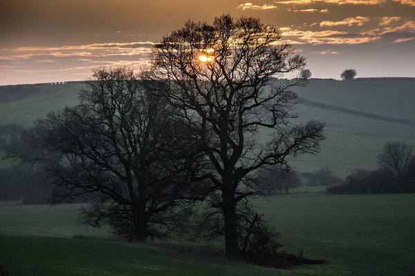 Photograph - Sunset Tree by Mark Hunter