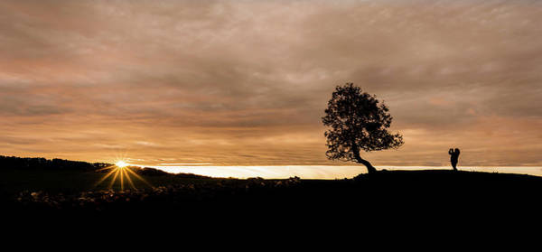 Photograph - Sunset Tree by Nick Bywater