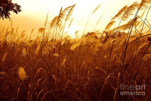 Photograph - Sunset Upon The Grassland by Christopher Shellhammer