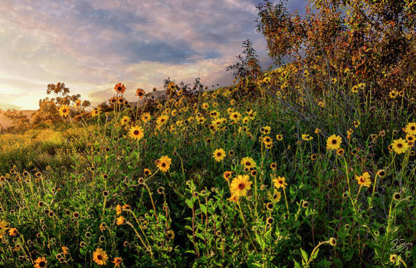 Photograph - Sunset Wildflowers by Endre Balogh