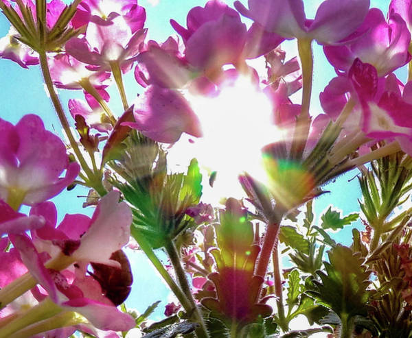 Wall Art - Photograph - Sunshine And Pink Flowers by Payton Schafer