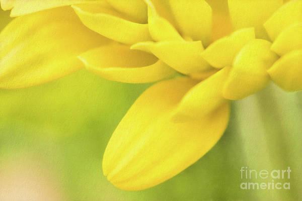 Photograph - Sunshine Petals by Marilyn Cornwell