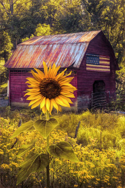Wall Art - Photograph - Sunshiny Autumn by Debra and Dave Vanderlaan