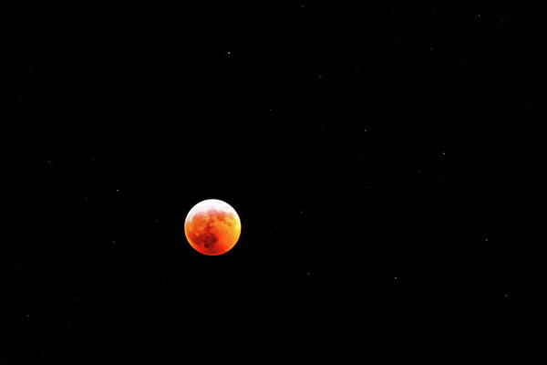 Photograph - Super Blood Wolf Moon 2019 by Onyonet  Photo Studios