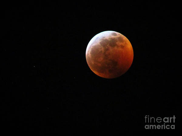 Photograph - Super Blood Wolf Moon Lunar Eclipse 2019 29407 by Robert Knight