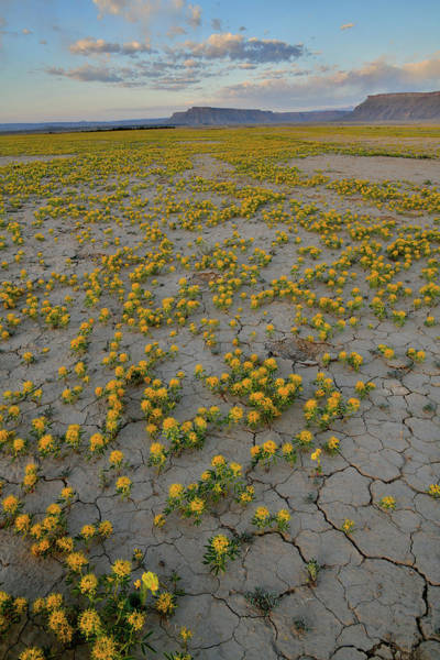 Photograph - Super Bloom Near Factory Butte by Ray Mathis