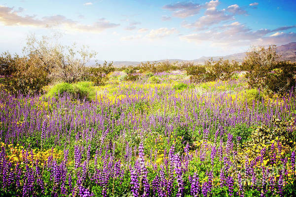 Photograph - Super Bloom by Scott Kemper