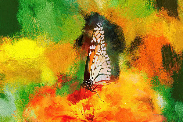 Photograph - Super Cool Monarch Butterfly by Don Northup