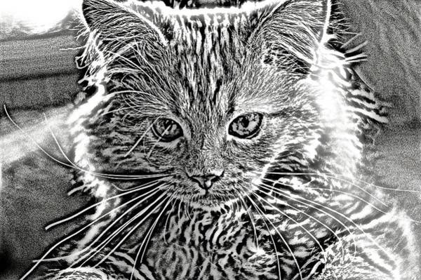Digital Art - Super Duper Cat Black And White by Don Northup