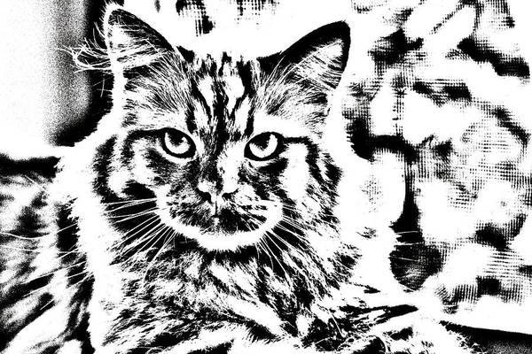 Digital Art - Super Duper Cat Drawing by Don Northup