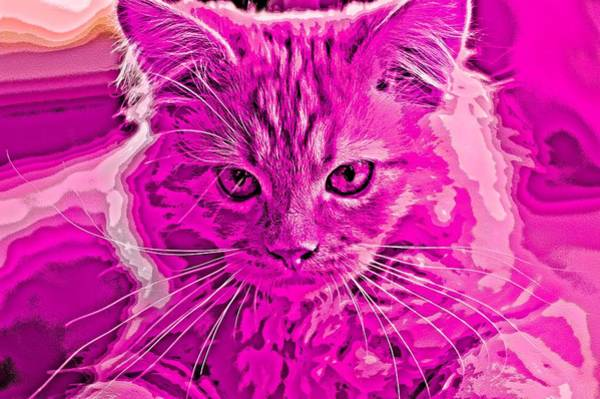 Digital Art - Super Duper Cat Mixed Media Pink by Don Northup
