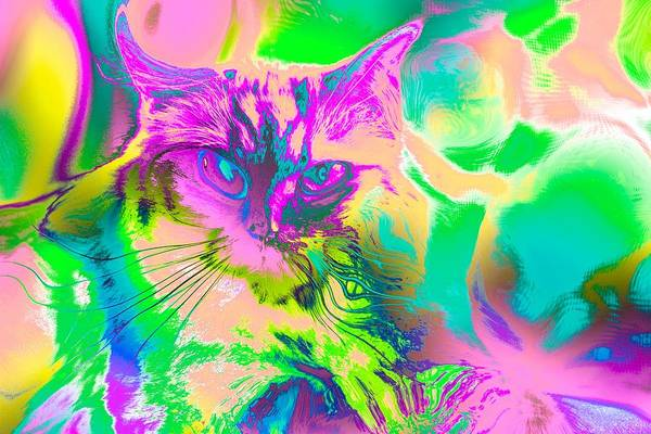Digital Art - Super Duper Cat Psychedelic Pink by Don Northup