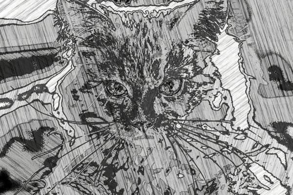 Digital Art - Super Duper Cool Cat Sketch by Don Northup