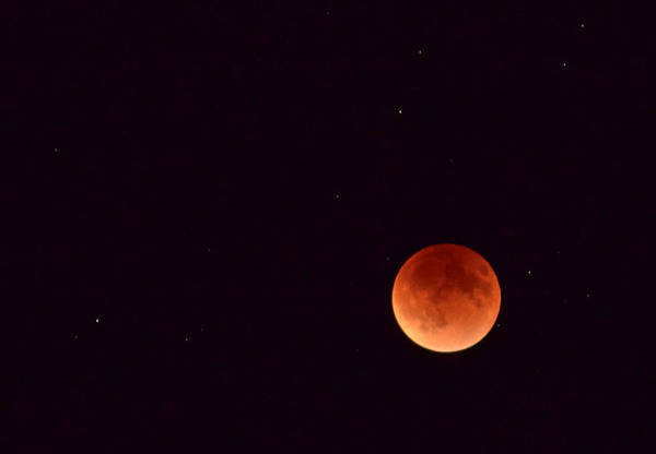 Photograph - Super Harvest Blood Moon by Carl Young