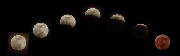 Photograph - Super Wolf Blood Moon Eclipse Sequence by Jim Dollar