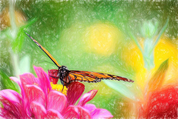 Photograph - Superb Monarch Butterfly by Don Northup