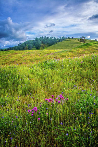 Photograph - Superbloom At Shell Creek 2019 by Lynn Bauer
