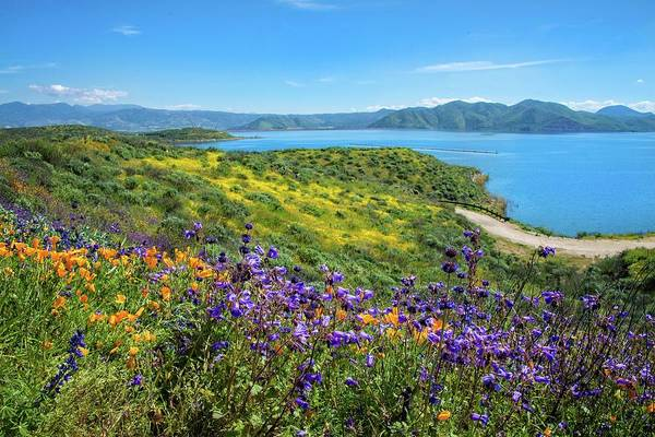 Photograph - Superbloom Beauty At Diamond Valley Lake by Lynn Bauer