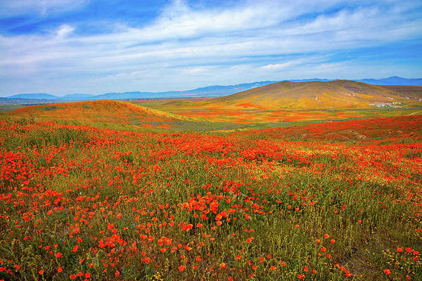 Photograph - Superbloom Dreamscape by Lynn Bauer