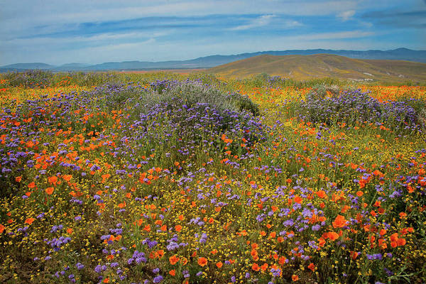 Photograph - Superbloom Explosion At The Poppy Reserve by Lynn Bauer