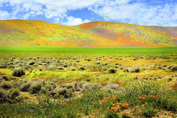 Photograph - Superbloom Hills Of Antelope Valley by Brian Tada