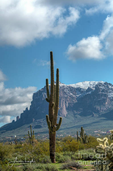Wall Art - Photograph - Superstition With Saguaro Friend by Ann Loyd
