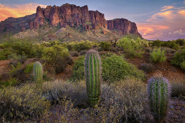 Photograph - Superstitions And Cactus At Lost Dutchman  by Dave Dilli