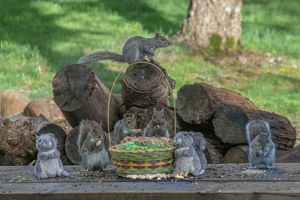 Photograph - Support The Easter Squirrel - The Bunny Can Not Even Climb A Tree And Is In Collusion Russia Bunnies by Dan Friend