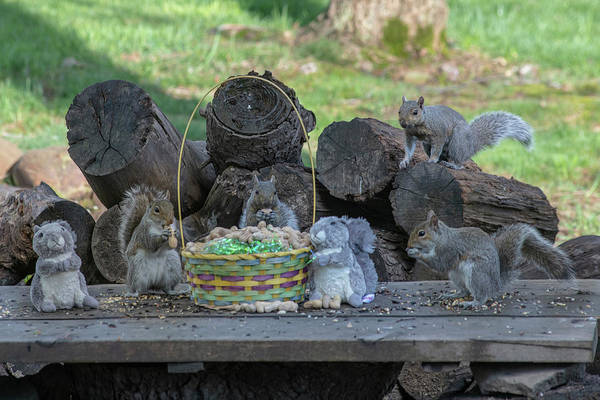 Photograph - Support The Easter Squirrel With Peanut Hunts Instead Of Egg Hunts I by Dan Friend