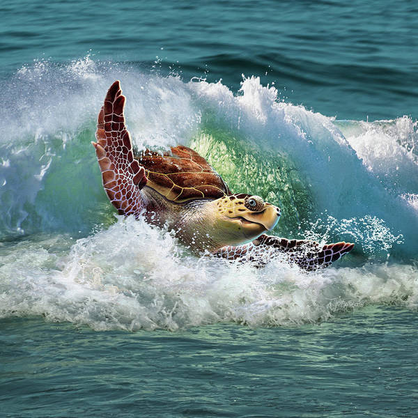 Wall Art - Digital Art - Surf To The Turf by Jerry LoFaro