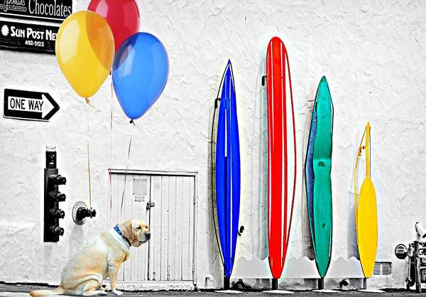 Wall Art - Photograph - Surfer Dog by Diana Angstadt