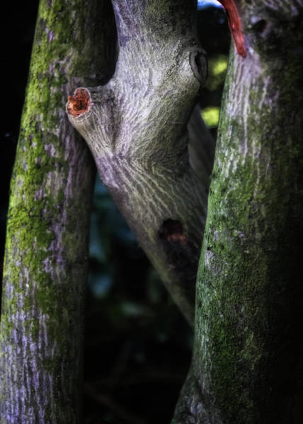 Wall Art - Photograph - Surprised Tree by Hans Zimmer