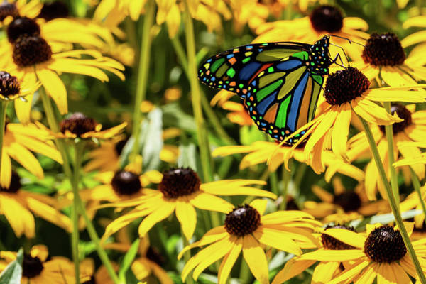 Photograph - Surreal Monarch On Flowers by Jason Fink