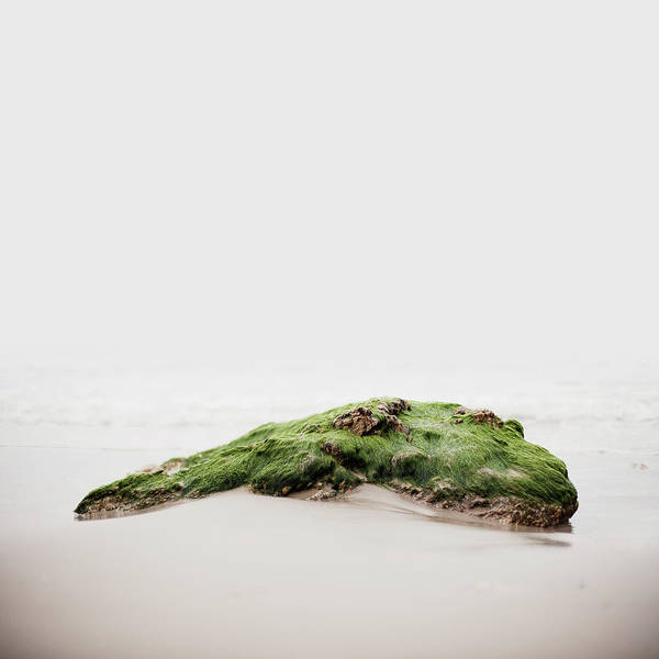 Seaweed Photograph - Surreal Rock With Seaweed by Salva López Photography