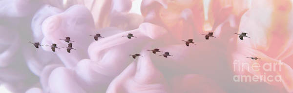 Wall Art - Photograph - Surreal Sandhills Flying In Formation by Carol Groenen