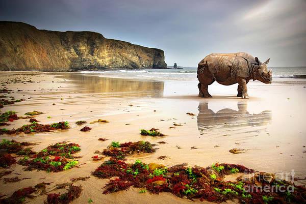Wall Art - Photograph - Surreal Scene Of A Big Rhinoceros In An by Carlos Caetano